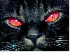 2679_Red_Eye